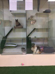 פנסיון לחתולים
