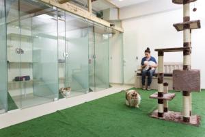 פנסיון לחתולים ברמת גן