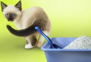 בעיות התנהגות בחתולים