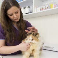 בית חולים לחתולים