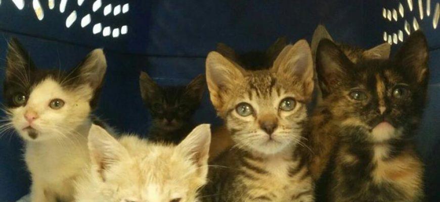 גור חתולים חדש בבית, כל מה שרציתם לשאול