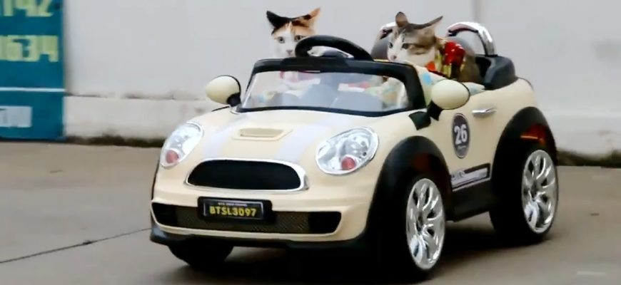 נסיעה עם חתול ברכב – עשרת הדברות לעשה ואל תעשה.