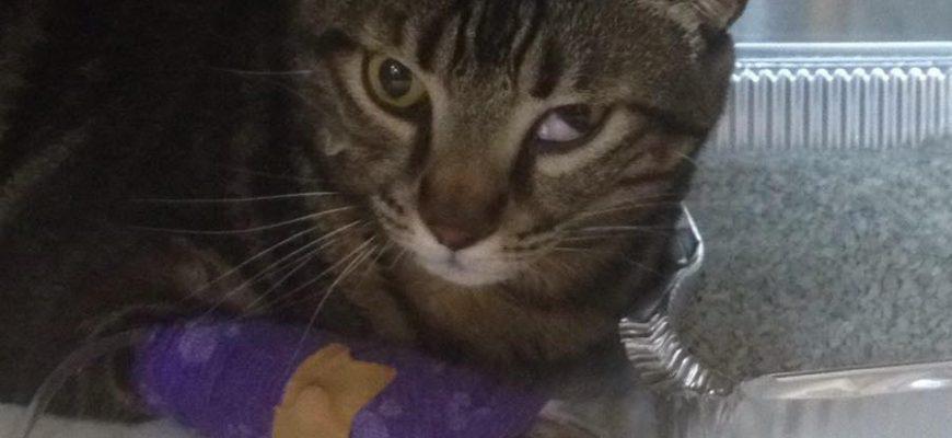 תסמונת הורנר בחתולים – או סינדרום הורנר בחתול